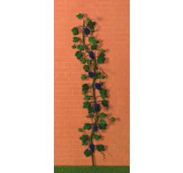 klimmende druiven rank  in blauw/paars
