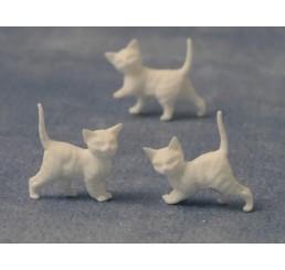 Witte kittens, 12 stuks