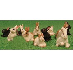 Diverse konijntjes