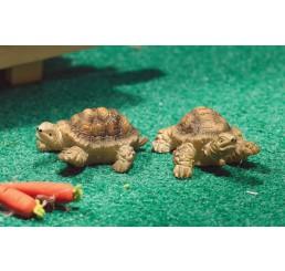 Terry & Jerry schildpadden