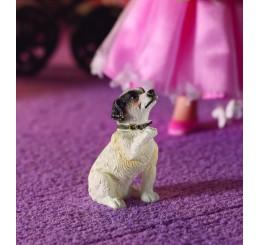Fergie de Jack Russell Terrier