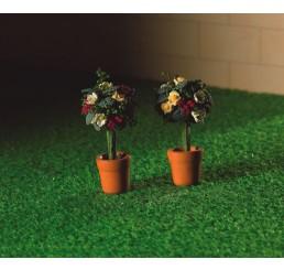 2 potjes met roosjes en groen blad