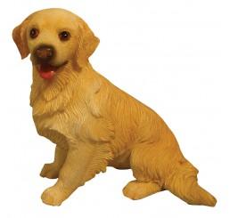 Golden Retriever, zittend