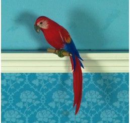 Timothy de papegaai