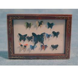 Vlindershowkast