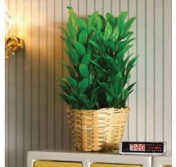 groene plant in rieten mand