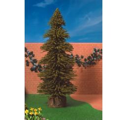 Denneboom, groot