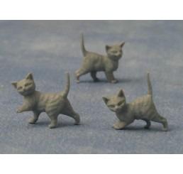 Grijze kittens, 2 stuks